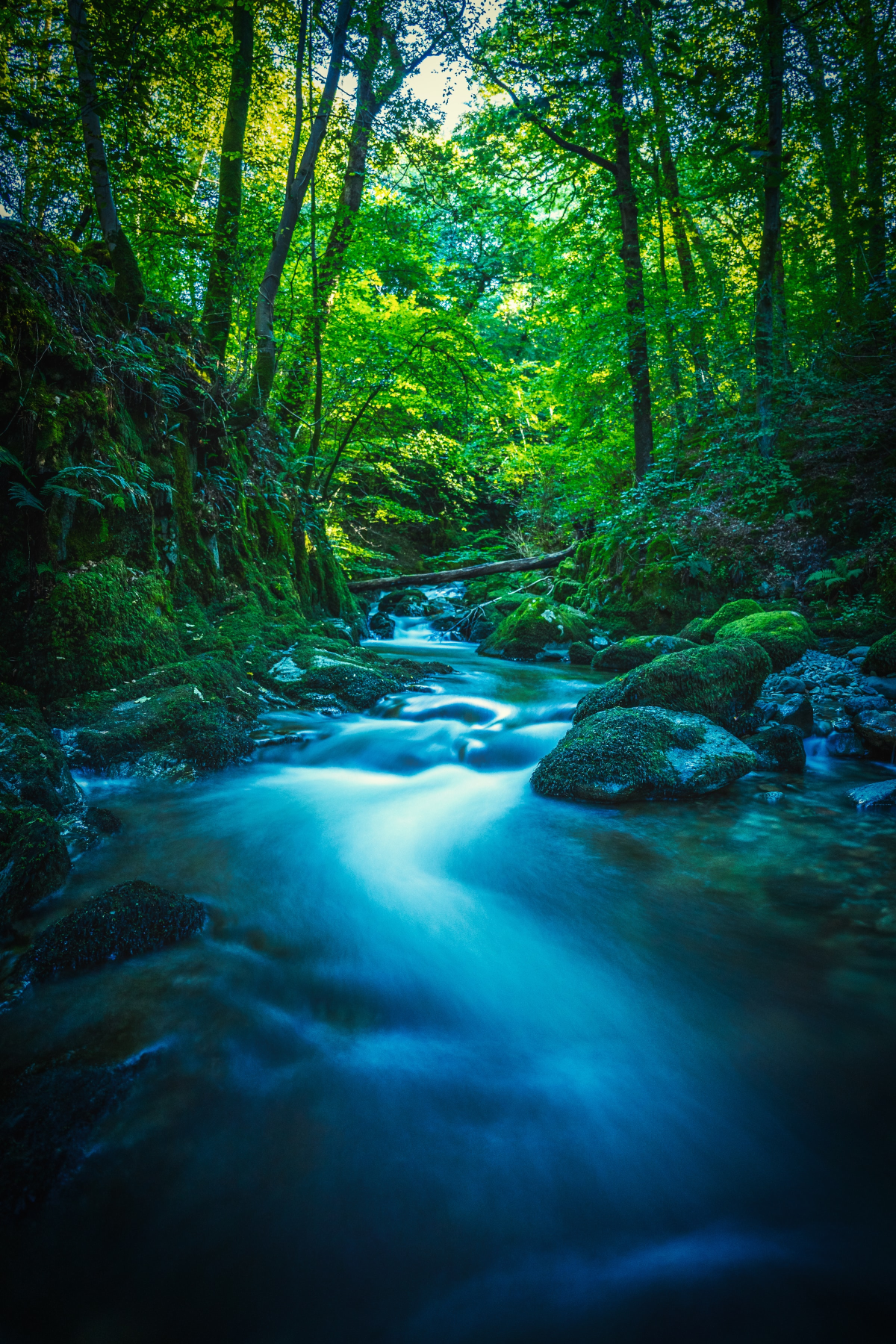 blue stream in forest